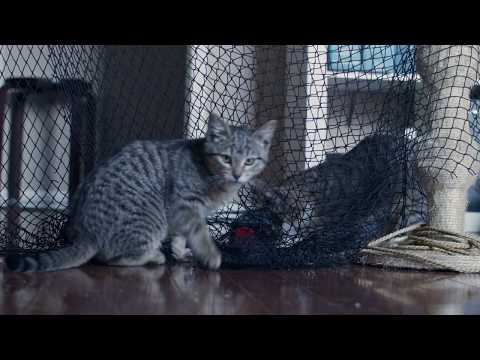 Kittens playing in a fishing net