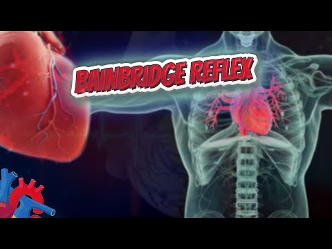 Bainbridge reflex (Human Heart ❤️ & Cardiology) ❤️🔊✅