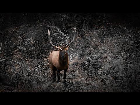 Bowhunting Elk - Dream Hunt 2019 - Part 1