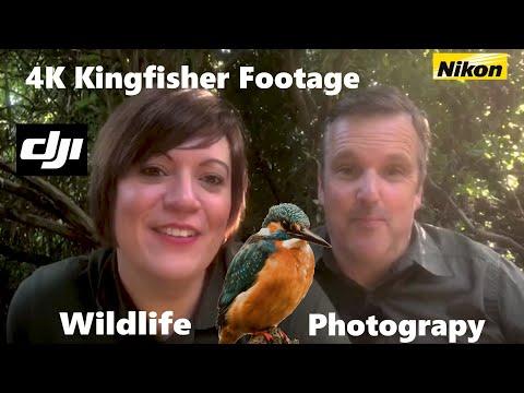 Wildlife Bird Kingfisher Photography | That Flash Of Blue