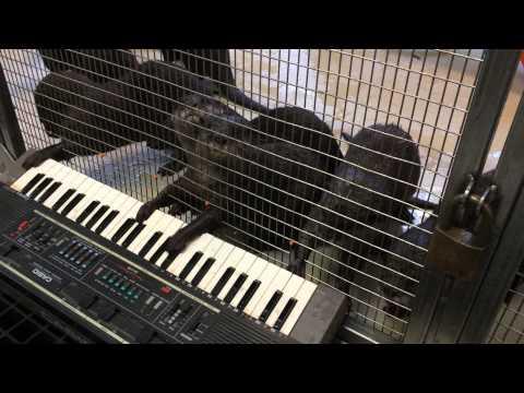 Otter Symphony