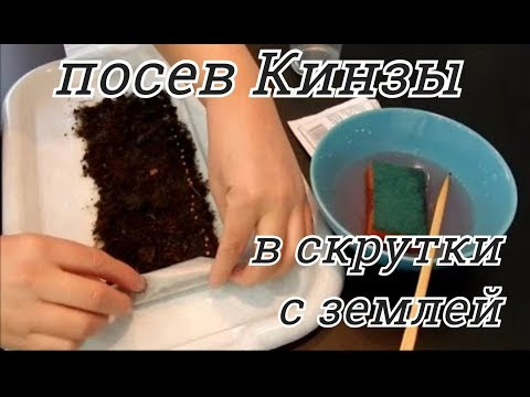 Как вырастить кориандр на подоконнике
