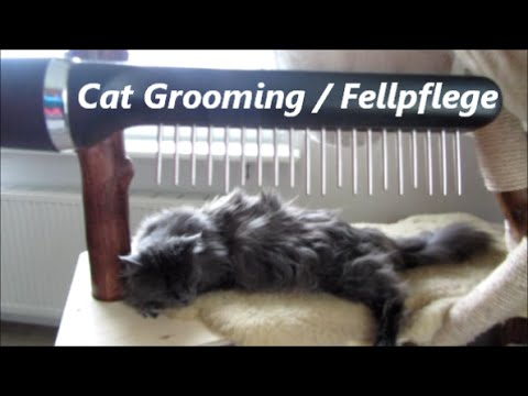 Maine Coon - Cat Grooming - Fellpflege