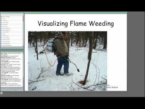 Flame weeding control of invasive woodland shrubs in New York