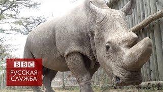 Последний самец северного белого носорога умер в Кении