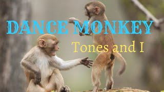 tones and i - Dance monkey mp3