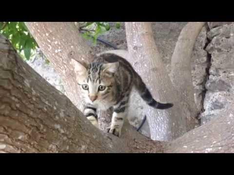 Okorongo: Gato Sokoke - Aventuras de un Gatito Sokoke