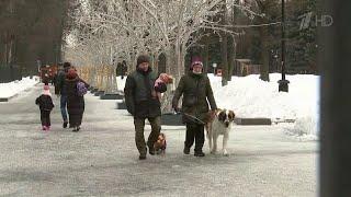 Погода в Центральной России подкидывает жителям новые сюрпризы, проверяя на прочность.