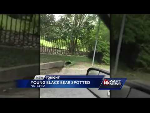 Bear caught on camera in Natchez