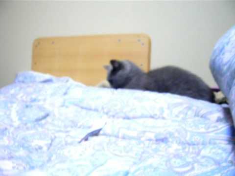 stupid cat  ドジ猫ちゃん