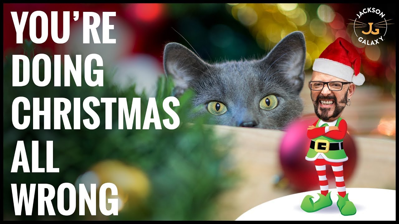 The Ugly Truth About Cats and Christmas Trees - YouTube