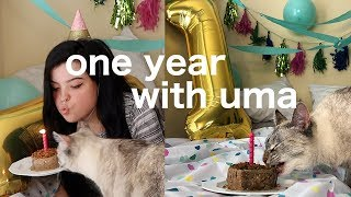 """i threw a """"party"""" for my cat"""