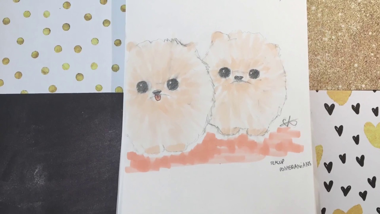 speed draw teacup pomeranians