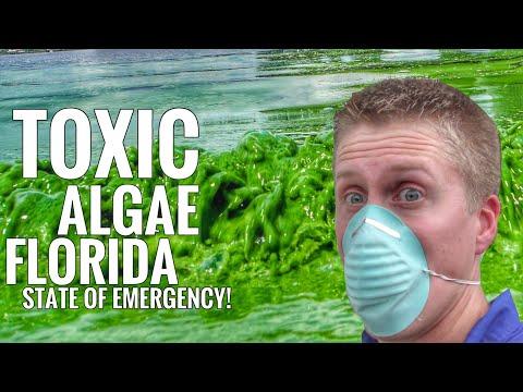 Florida State Of Emergency:  Toxic Blue/Green Algae?