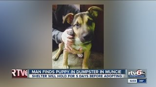 German Shepherd Puppy Found In Muncie Dumpster
