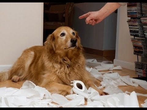 Funny Guilty Dogs Compilation 2013