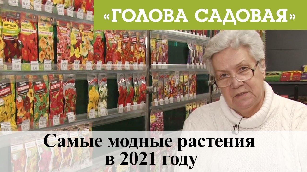 Голова садовая - Самые модные растения в 2021 году