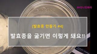 발효종, 사워도우 스타터, 르방 만들기 #4 (간단한 …
