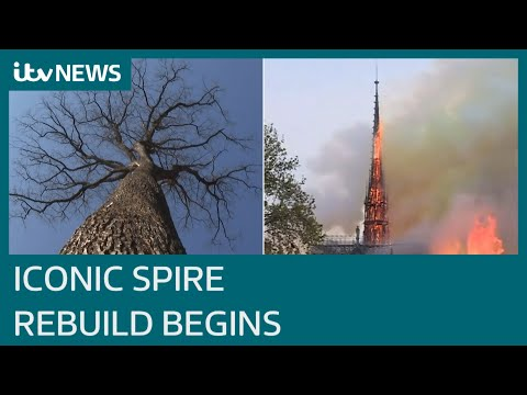 Notre Dame: The ancient wood that will bring a renaissance to the Paris skyline | ITV News