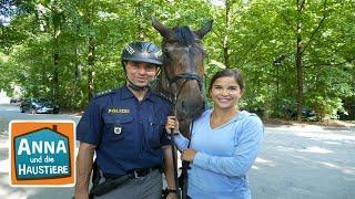 Ein Tag mit Polizeipferden   Information für Kinder   Anna und die Haustiere   Spezial