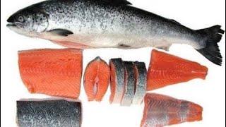 कसा असतो सालमन मासा || what is salmon fish ? Salmon is very healthy fish