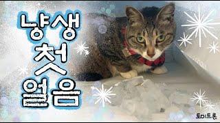 [장난감 나라의 트론이] EP. 41 고양이에게 얼음을…