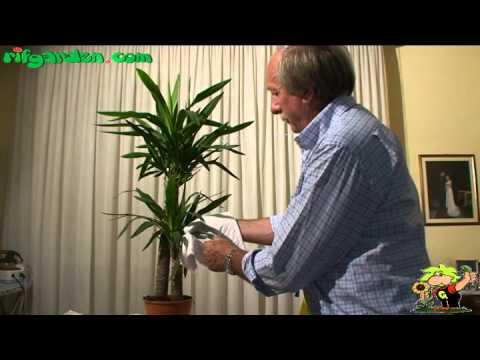 El jardinero en casa la yucca doovi for Jardinero en casa