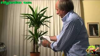 Cultivating Yucca