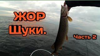 Часть2 Осенний ЖОР щуки Рыбалка на спиннинг с лодки на Рыбинском водохранилище