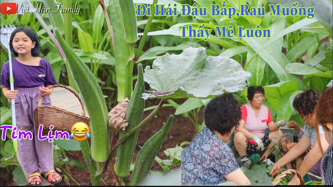🇰🇷Lên Rẫy Hái Đậu Bắp , Rau Muống Tại Hàn Quốc Thấy Mê Luôn