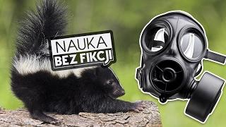 Cuchnące zwierzęta i rośliny | Nauka BEZ fikcji #15
