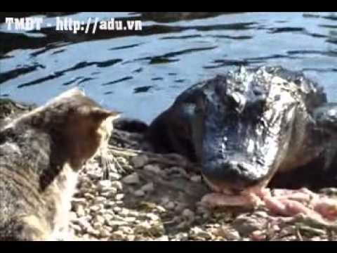 Mèo đánh nhau với cá xấu, cá xấu chịu thua - adu.vn