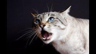 Кошки в магнитном поле.....
