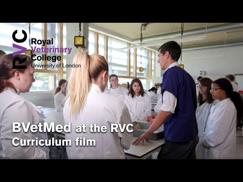 BVetMed at the Royal Veterinary College Curriculum Film