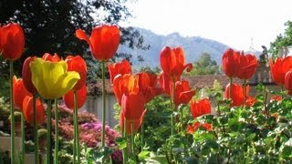 The Flowering of Tulips in Villa Taranto (HD)