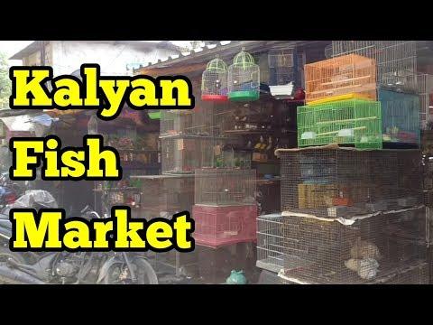 CHEAPEST AQUARIUM FISH MARKET IN INDIA
