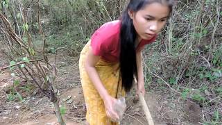 Primitive Technology - Pretty girl Find cricket cook - cook on rock eating delicious