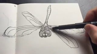 How to draw dragonfly | TUTORIAL