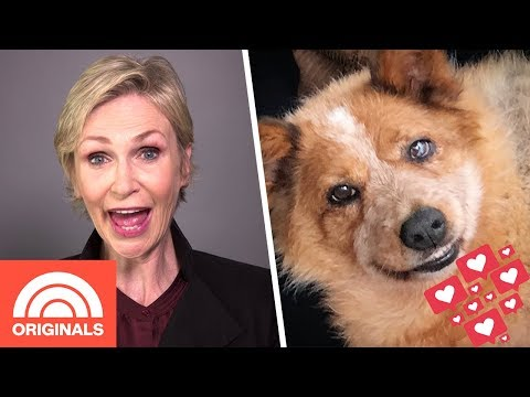 How Jane Lynch found comfort in her rescue dog's viral Instagram account