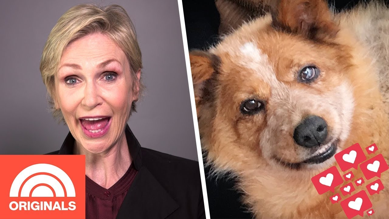 Jane Lynch's Recovering Rescue Dog Is An Instagram Star   My Pet Tale   TODAY ORIGINALS