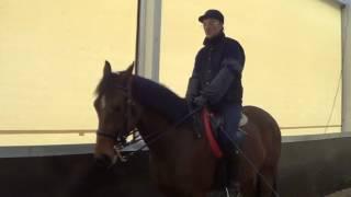 Конный спорт. Обучение лошади. Михаил Кизимов. Переходы