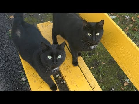 Two black cats live on the bench
