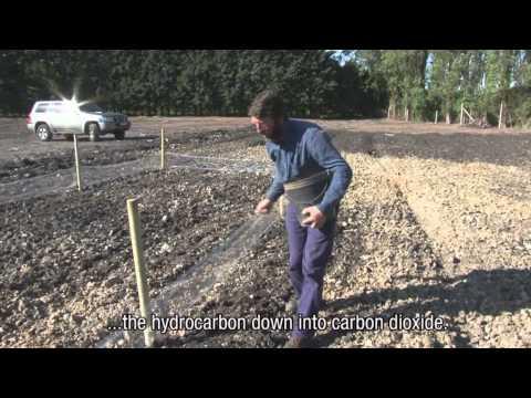 Phytoremediation rehabilitation hydrocarbon contaminated soil oil storage Total Belgium
