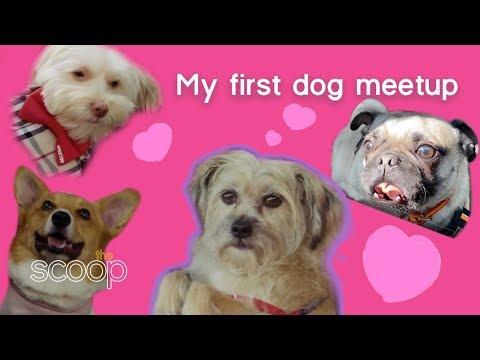 Gemma's First Dog Meetup | The Scoop