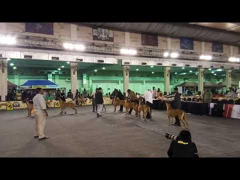 Bangalore canine club 2017
