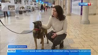 Собаки в кинологической службе аэропорта