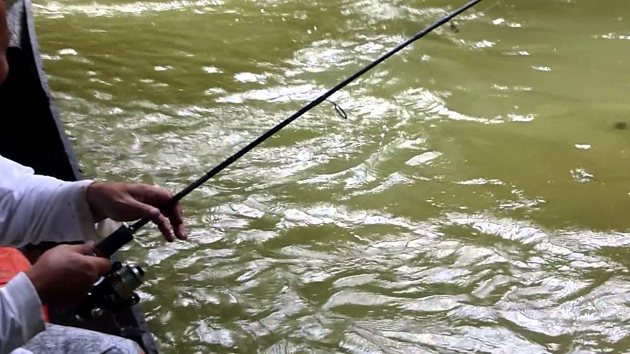nginti ikan semah sungai lemanak sarawak borneo fishing 1 - YouTube