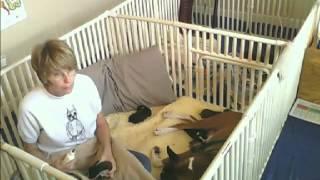 Bottle Feeding Infant Boxer Raw Goats Milk