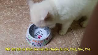 MÈO CẢNH ĐẸP. HOT! HOT! MÈO NGA ĂN GÌ. SỰ THẬT ÍT NGƯỜI BIẾT. что едят Pусские Kошки?