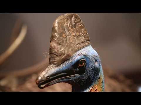 Machdeburg-Die App: Kulturhistorisches Museum und Museum für Naturkunde